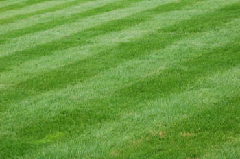 First spring lawn cut into stripes